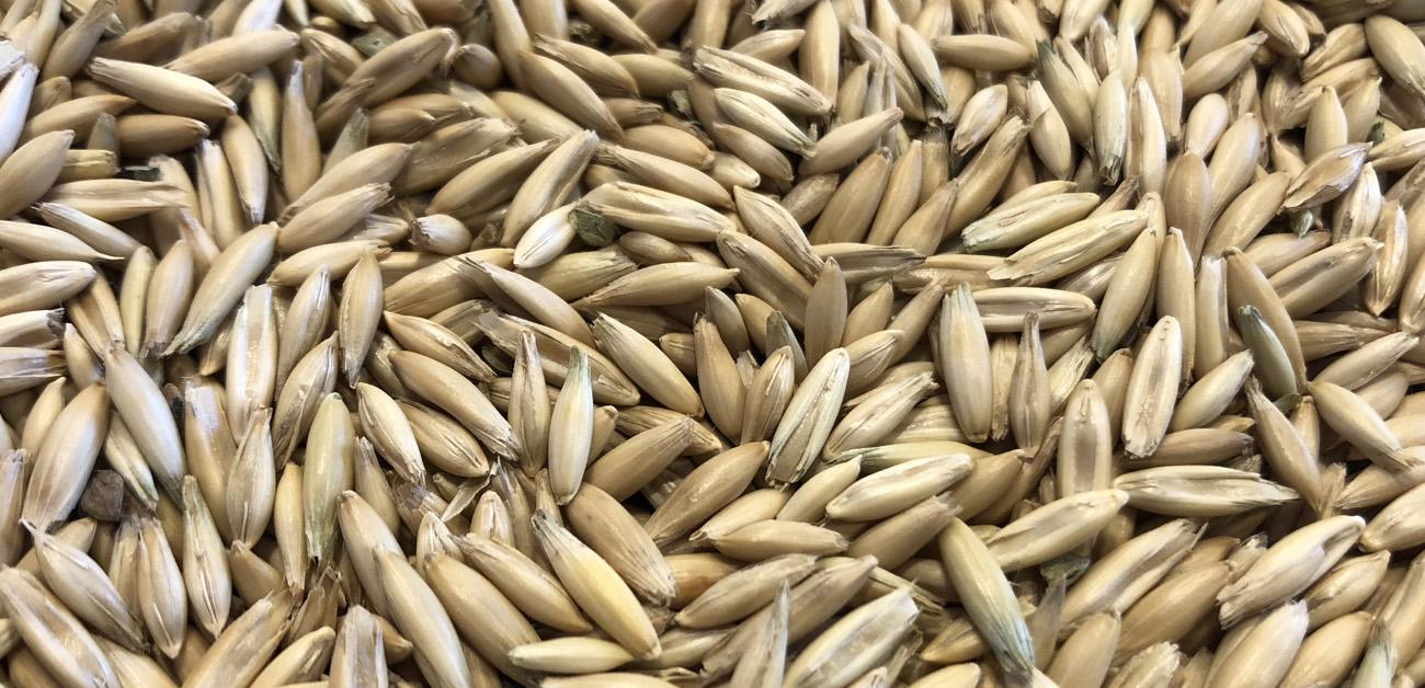 Up North Organic Beans | North Dakota Organic Grains